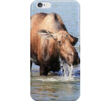 Cow Moose and her Calf iPhone Case/Skin