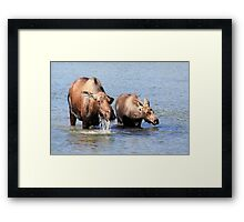 Cow Moose and her Calf Framed Print