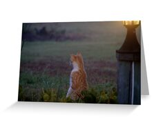 Night Vigil Greeting Card