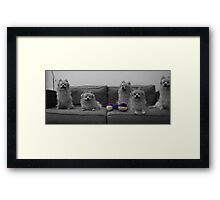 Lots of Grace Framed Print