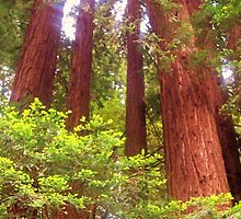 Redwood Family Cirlce by MichelleRees