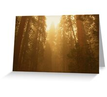 sequoia in the sun, usa national park Greeting Card