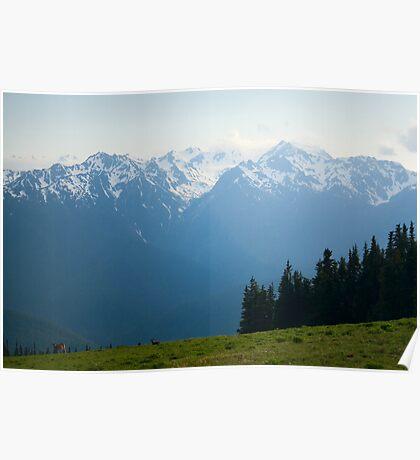 Mt. Olympus Peaks at Hurricane Ridge Poster