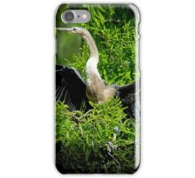 Anhinga in the Tree iPhone Case/Skin