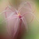 Reaching  Out by enchantedImages