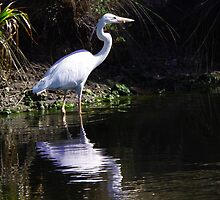 Giant white heron in pond by Bigart32