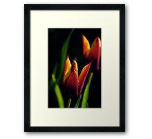 tulips...  Framed Print