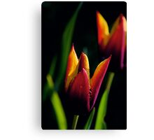 tulips...  Canvas Print