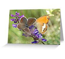 Female Idas Blue, plebejus idas  and Pearly Heath,Coenonympha arcania   Greeting Card