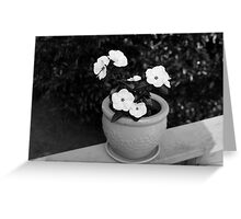 Vincas in Black and White Greeting Card