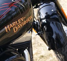 Rule of Thirds: Harley by Harleygirl