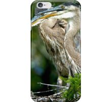 Two Baby Great Blue Herons iPhone Case/Skin