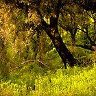 Solstice Canyon, California by LudaNayvelt