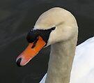 Swan's Head by Carol Bleasdale
