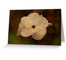 Vinca With Texture Greeting Card