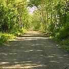 The Lane by Littlehalfwings