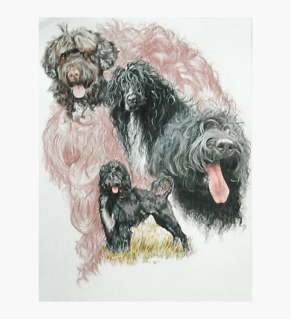 Portuguese Water Dog w/Ghost Photographic Print