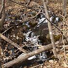Babbling Brook by christyb