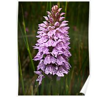 Heath Spotted-orchid Poster
