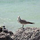 the bird by Misunderstood24