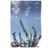 Beautiful Spring Time Flowers Poster