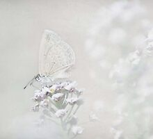 Virtuous Butterfly by garts