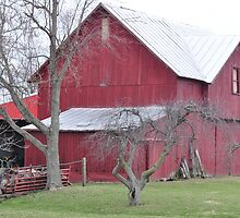 Red barn and bare trees by mltrue