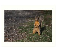 Silly Squirrel Art Print