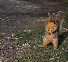Silly Squirrel by Belle Farley