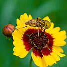 The Fly and The Flower by Mukesh Srivastava