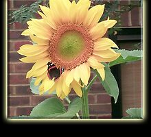 Sunflower on Butterfly, environment, English Country Garden by TOM HILL - Designer