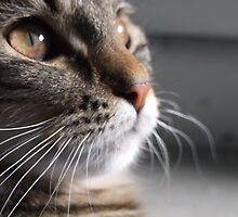 Close-up Kitty by Bernie Stronner