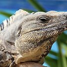 Iguana Closer by Teresa Zieba