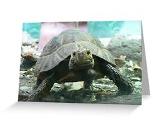 Tortoise power at Taronga Zoo Greeting Card