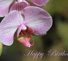 Happy Birthday Orchid Card by Teresa Zieba