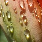 Bejeweled by Nadya Johnson