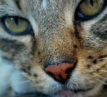 Extreme Close Up.  by Emily-RoseIrene