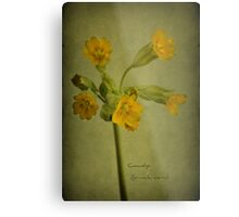 To the cowslip Metal Print