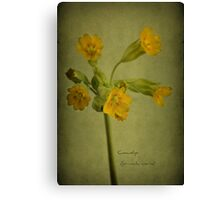 To the cowslip Canvas Print