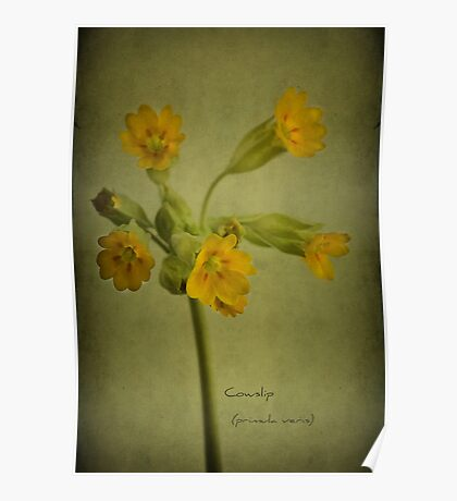 To the cowslip Poster