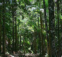 Tallebudgera Valley Rainforest by Murray Swift