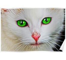 Green Eyes Cat Poster