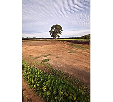 the planting fields Photographic Print