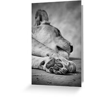 The Lion's Paw Greeting Card