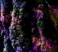 Lilac. by Vitta