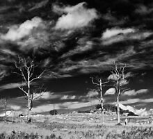 Dead Trees and Rocks by David de Groot