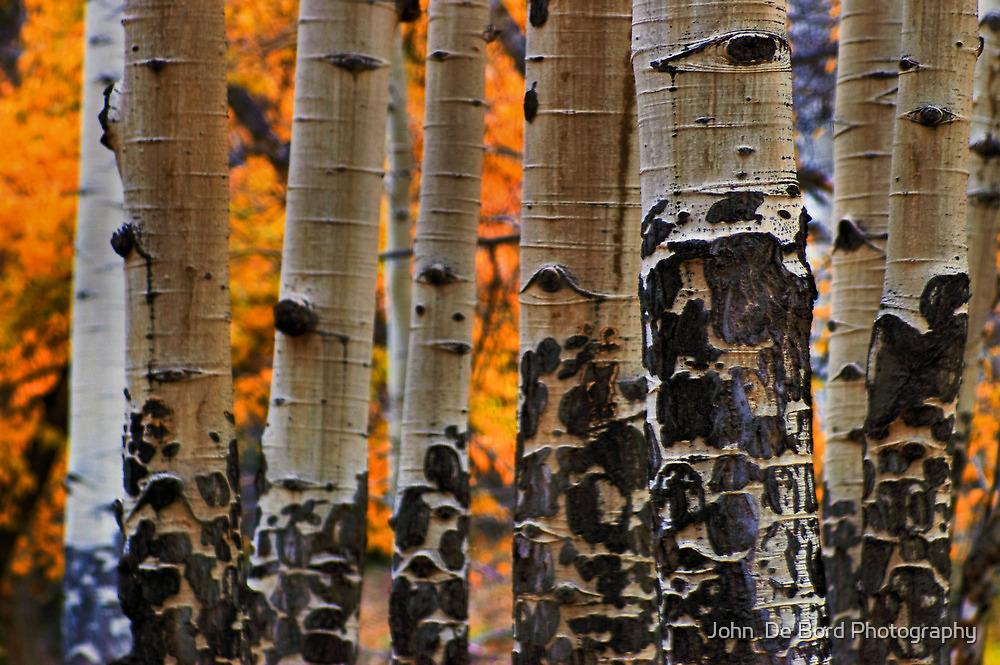Autumn Textures by John  De Bord Photography
