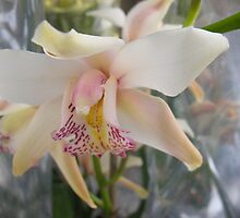 Insulated Orchid by MarianBendeth