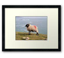 Tagged Sheep Framed Print