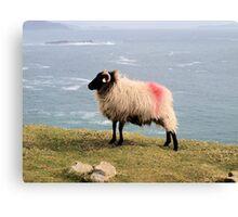 Tagged Sheep Canvas Print